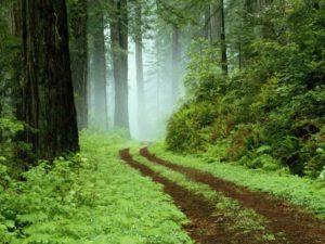 Sortie d'été « Journée nature à Montenach »